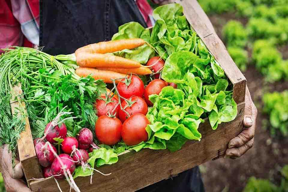 オーガニック農業